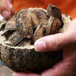 О полезных свойствах бразильского ореха и противопоказаниях