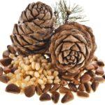 Лечебные свойства настойки на кедровых орехах. Рецепты