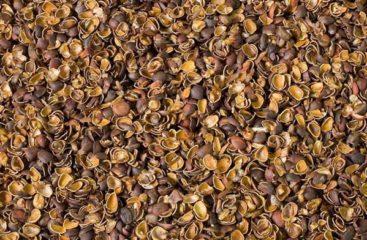 Применение скорлупы кедрового ореха