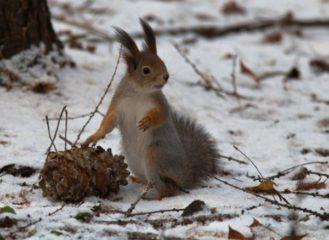 Польза и вред кедровых орешков